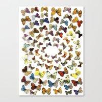 butterflies Canvas Prints featuring Butterflies by Ben Giles