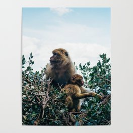Macaque Mother and Daughter Poster