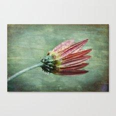 Vintage Daisy in the Rain Canvas Print