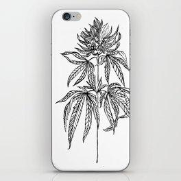 Cannabis Illustration iPhone Skin