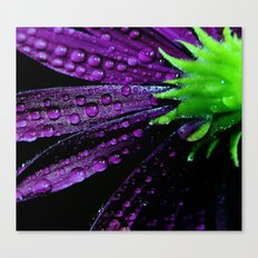 flower purple green Canvas Print