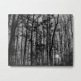 Sunlight through the trees Metal Print
