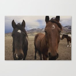 Horses Before the Storm Canvas Print
