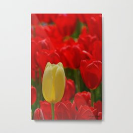 Single Yellow Tulip Metal Print