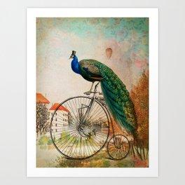 Mr Peacock Sunday Walk Art Print