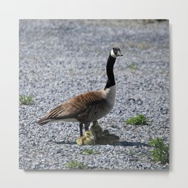 Goose and babies Metal Print