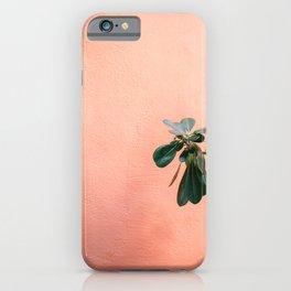 Green on Coral II   Botanical Rovinj fine art photography print   Croatia travel  iPhone Case