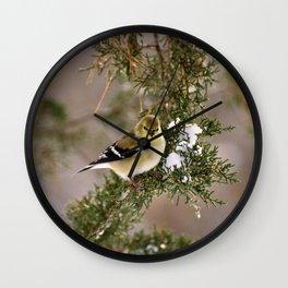 Professor Goldfinch Wall Clock