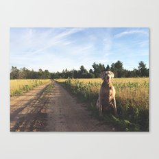 Farm Field with Charley Canvas Print