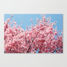 Plum Blossoms Japanese Ume Tree in Early Spring Photography Canvas Print