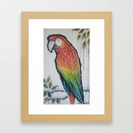 scarlett red macaw Framed Art Print