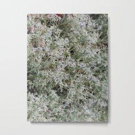 White Moss Metal Print