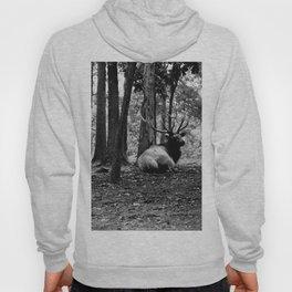 Elk Laying Down in Woods Hoody