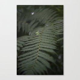 Plant -Fern Canvas Print