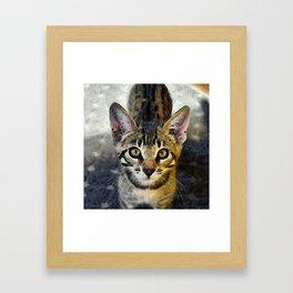 Cute Kitten Framed Art Print