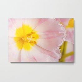 Yellow stamen of pink tulip Metal Print
