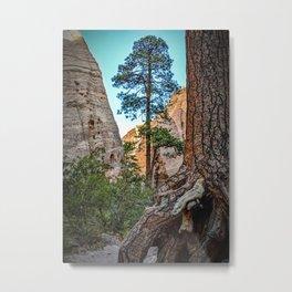 Pondersoa Pine at Tent Rocks Metal Print