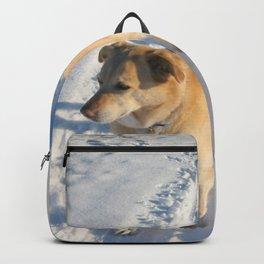 Waiting Dog | Lab Husky Backpack