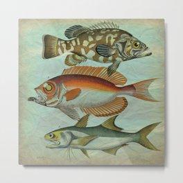 Fish Friends Metal Print