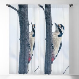 Great spotted woodpecker Blackout Curtain