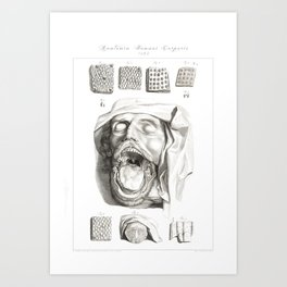 Human Anatomy Art Print MOUTH TONGUE PAPILLE Vintage Anatomy, doctor medical art, Antique Book Plate Art Print