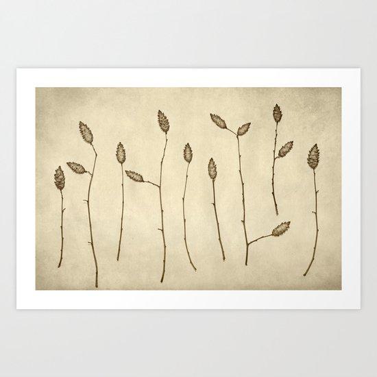 Fir-Cones Forest Art Print