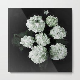 White lilac 5 Metal Print