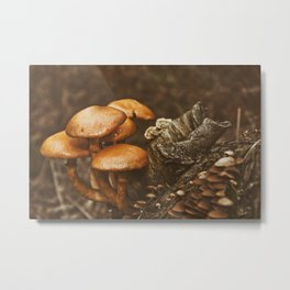 Fall life Metal Print