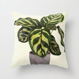 calathea botanical interior plant Throw Pillow