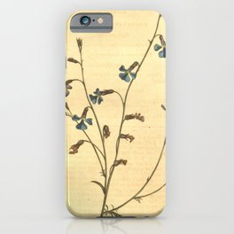 Flower 741 lobelia gracilis Slender stemmed Lobelia10 iPhone Case