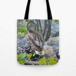 Duck on the Rocks (Common Mallard) Tote Bag
