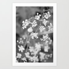 Queen Anne's Lace Wildflowers Art Print