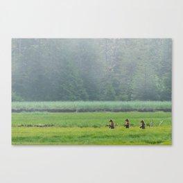 Looking for Goldilocks Canvas Print