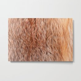 Red fox fur cloth texture abstract Metal Print