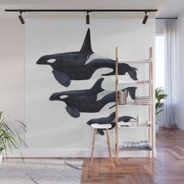 Orca (Orcinus orca) Wall Mural