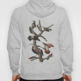 Hairy woodpecker, Birds of America, Audubon Plate 416 Hoody