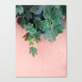 Pink Green Leaves Canvas Print