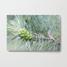 Pine Cone 1 Metal Print