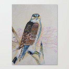 Common Kestrel Canvas Print
