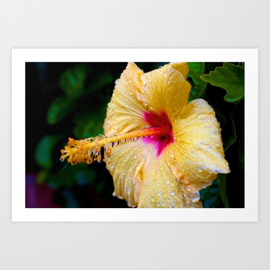 Wet Hibiscus version 2 Art Print