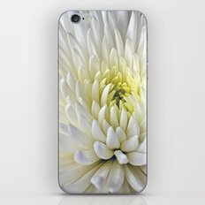 White Dahlia Flower iPhone & iPod Skin
