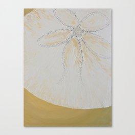 Sand Dollar 1 Canvas Print