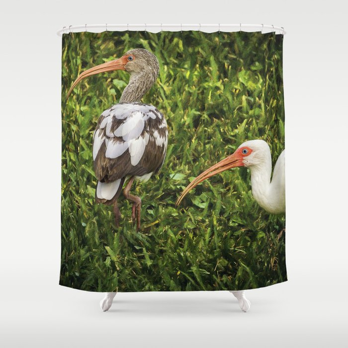 White Ibis - Adult and Juvenile Shower Curtain