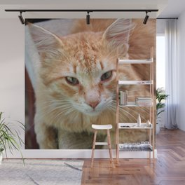 Street Cat - Ginger Tom  Wall Mural