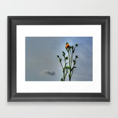Compass Plant Framed Art Print