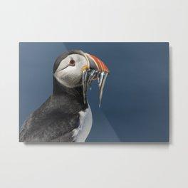 Atlantic puffin bird with fish Metal Print