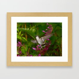 Hummingbird and pink agastache flower 44 Framed Art Print