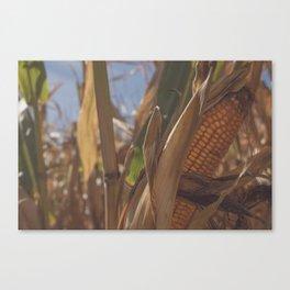 Fall Corn Canvas Print