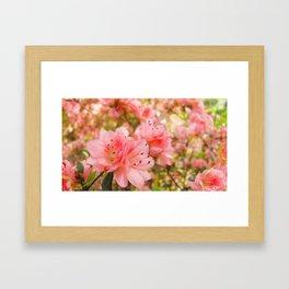 Softer Framed Art Print