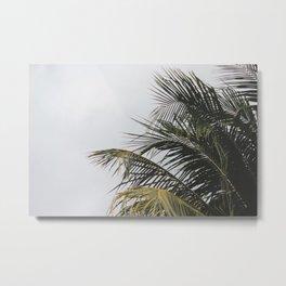 palm treee Metal Print